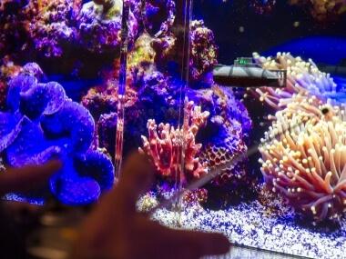 SeA Quest Aquarium - ponorka na ovládání od Event Interactive